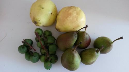 coings,fruits d'automne,clea cuisine,gateau aux coings